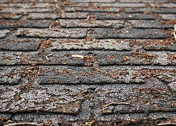 Professional Roofing LLC Images